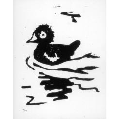 Jeune canard